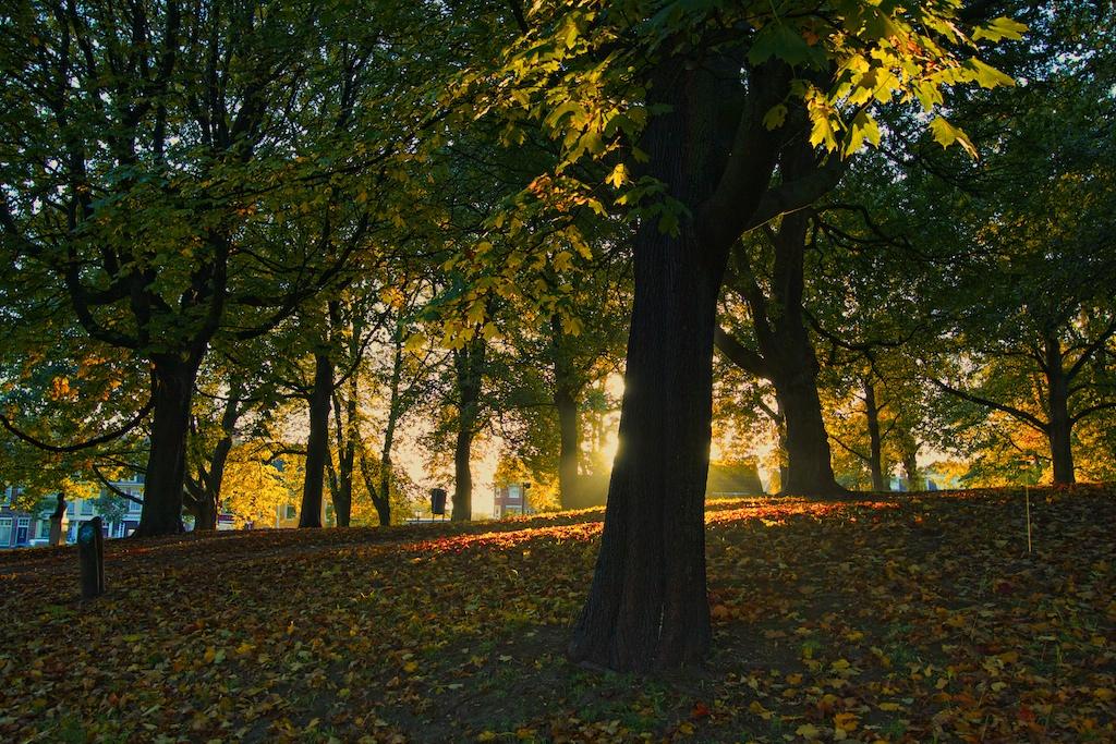 Bedrijfsuitje Leeuwarden Groen Park
